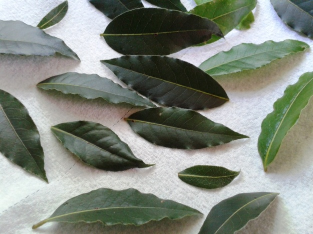 Bay Leaves Ready for Drying